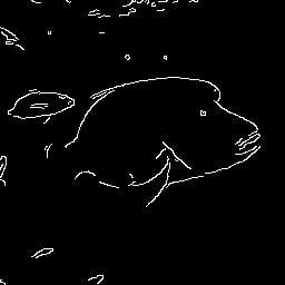 魚の輪郭画像
